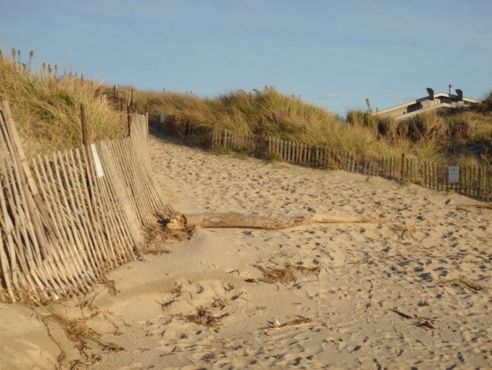 Dune grass behind sand is protected by fence.
