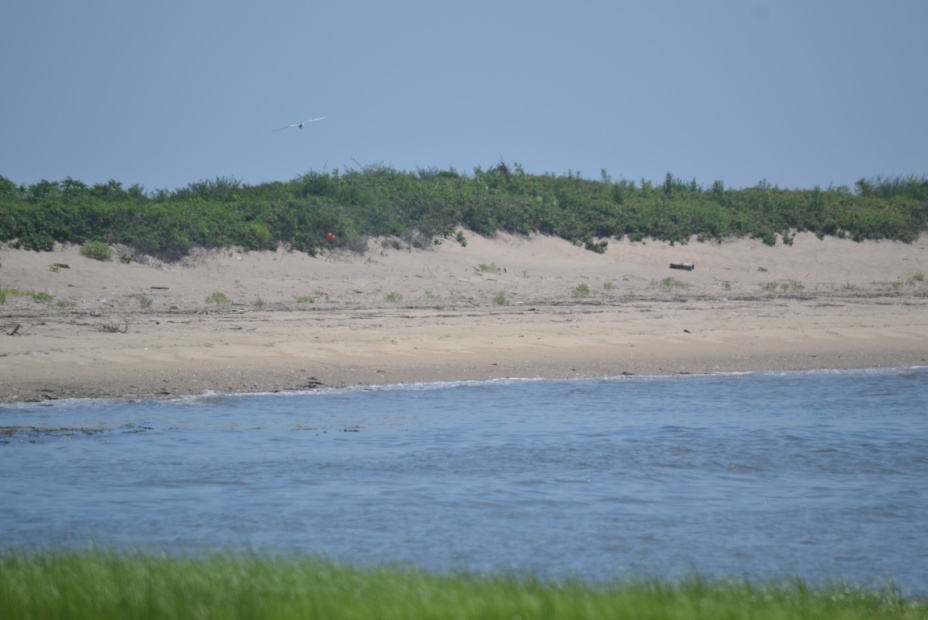 Stable shoreline has dry sand beach above mean high water backed by a vegetated sand dune.