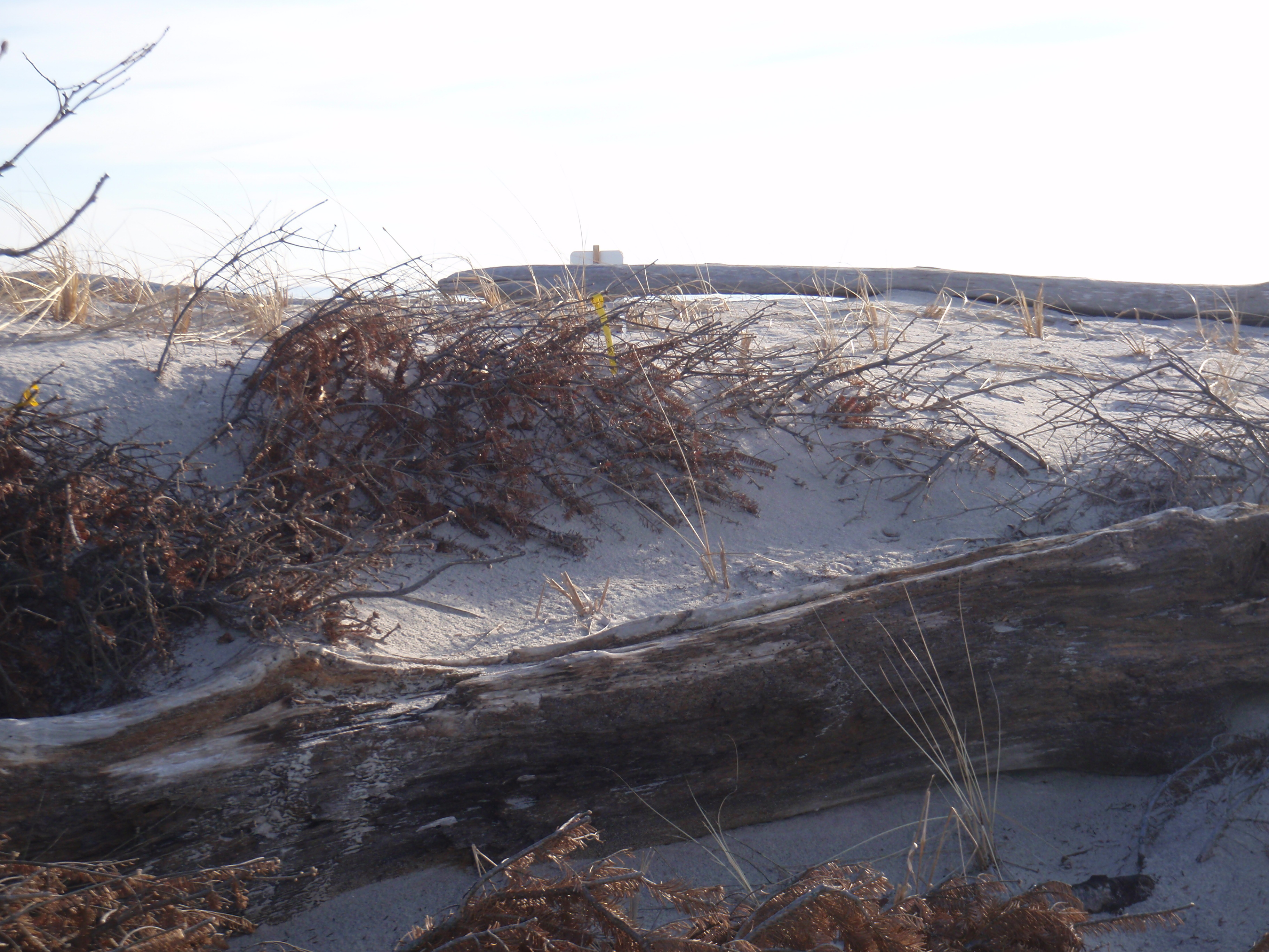 Waterford beach with Christmas tree to control erosion